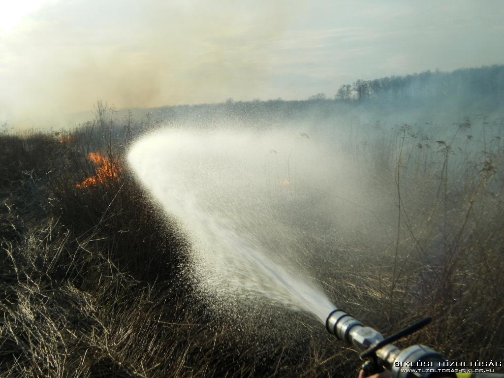 2010 03 21 Leégett a legelő Egyházasharasztinál 3