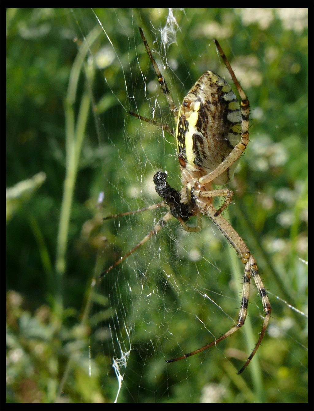 pók tízórai