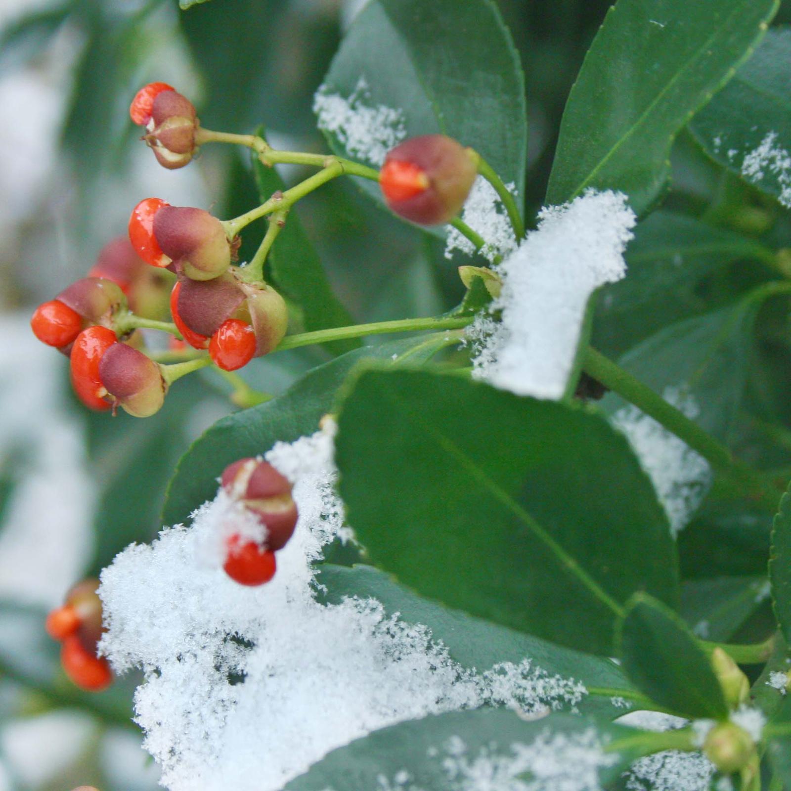 Az első hó Nr 01