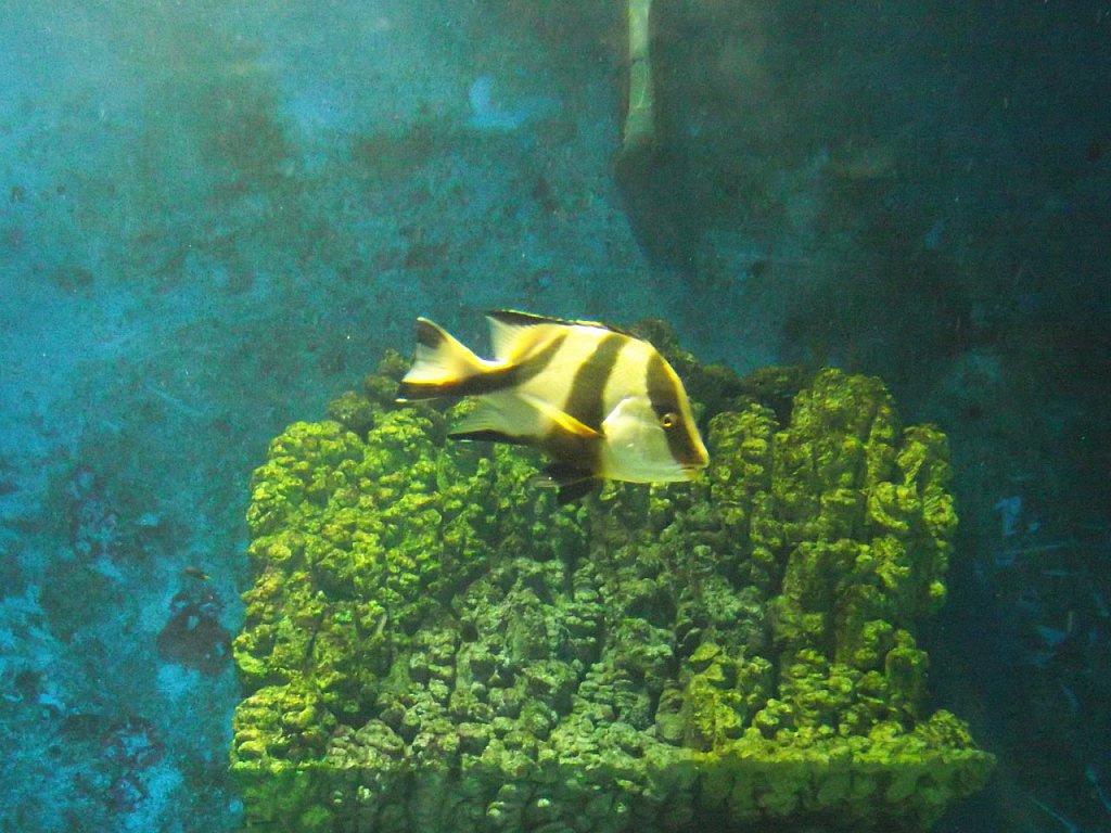 Zöld piramis