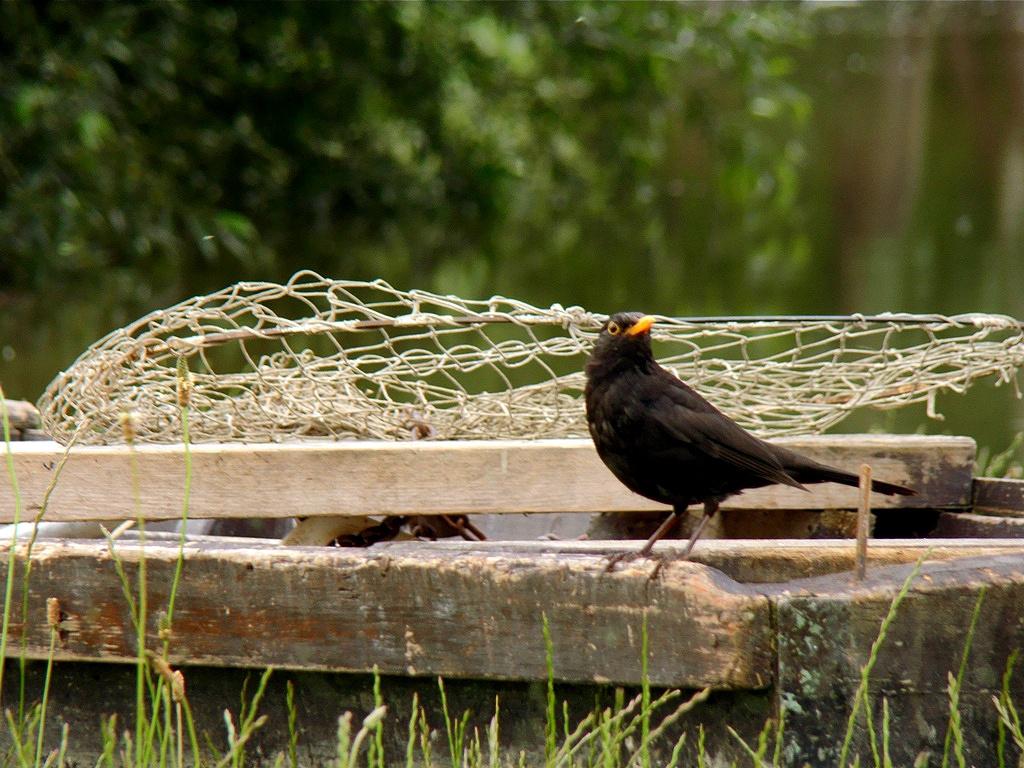Amikor a madár is csónakkal jár